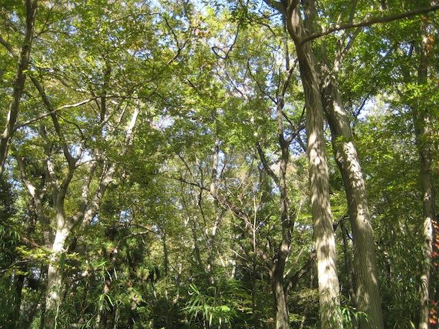 日立製作所 中央研究所の森